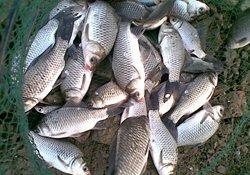 冬季钓鲫鱼合适的水深与钓位选择
