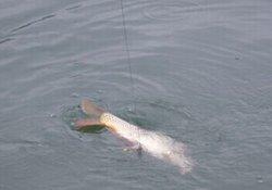 冬季浅水好钓鱼吗 浅水钓鱼打窝与作钓策略