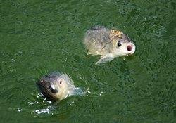 钓鱼人根据鱼情选择钓点的诀窍
