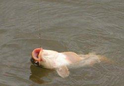 冬季深水区钓鱼 独特打窝技巧快速诱鱼