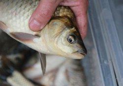冬季垂钓根据鱼情规律选择钓位