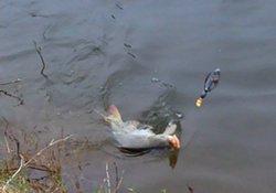 气温降低与升高对钓鱼的影响