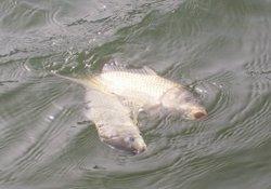 浮钓大鱼的技巧与适合钓浮的鱼情详解
