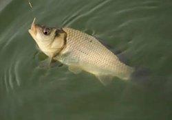 春天什么天气适合钓鱼  春钓的钓法与选位技巧