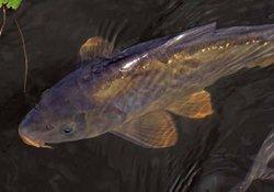 根据水库野生鲤鱼的习性巧妙选择钓位