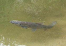 自然水域钓青鱼的钓具搭配与钓鱼技巧