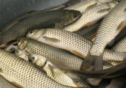 夏季水库钓草鱼的钓具搭配与钓法技巧