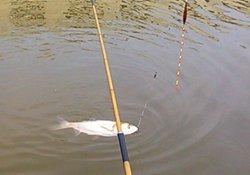 夏季水库钓鲢鱼的用饵技巧与垂钓技巧