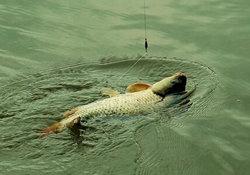水库池塘钓大鱼的溜鱼方法 把控鱼竿才能轻松上鱼