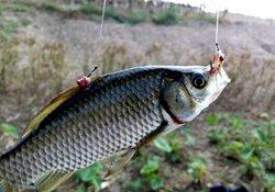 秋季钓鱼的简单方法与注意事项