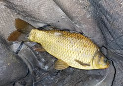 水库湖泊等自然水域冬天钓鲫鱼的技巧