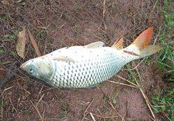秋季钓鲤鱼应当注意三个方面的问题