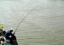 大鱼上钩后又跑鱼,需加强学习溜鱼技术