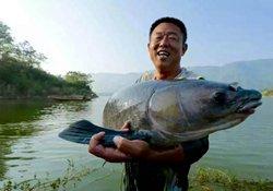 准确了解秋季野钓鱼情 近岸短竿也能钓大鱼