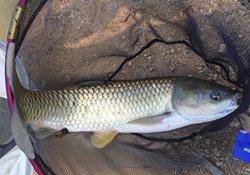 全面解析钓草鱼的技巧,助你渔获满满