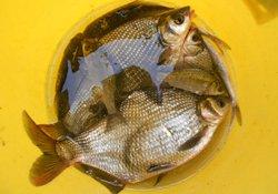 水库垂钓鳊鱼的时候需要注意的技巧