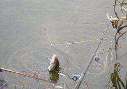 冬季水库矶竿钓鱼的钓法解析