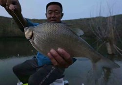水库垂钓鳊鱼选好钓位、用好饵料及钓法技巧的掌握