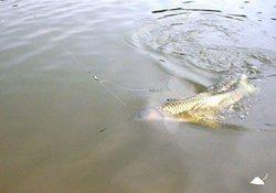 初秋是最适宜钓草鱼的时节 钓友分享垂钓草鱼的经验