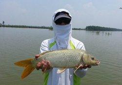 高温秋季钓鲤鱼的钓点与饵料味型分析