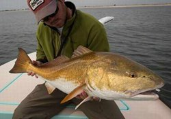 要想钓的上大鱼 不得不谈的溜鱼技巧