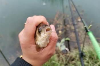 换个角度看待灵顿问题,观察鱼的吃钩位置,做调整