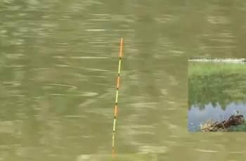 深度解析钓鱼看漂应如何正确抓口?提高中鱼率!