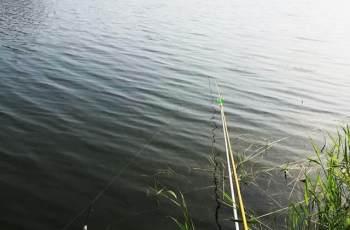 浮漂有力下沉,提竿却无鱼!钓友别发愁,来看看