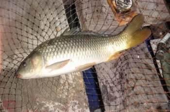 鱼群不在水底,除了钓离底,还可以试试反向钓离底
