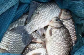 钓鱼要不掌握这些知识点,别人爆护你只有看着的份