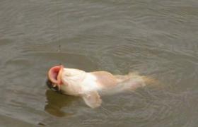 秋季水库大鱼鱼口好 应该如何钓大鱼