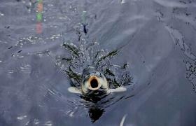 出现鱼吃饵时鱼钩挡口现象的原因与解决办法