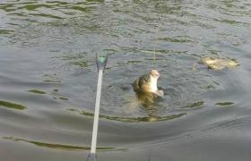 秋季钓鱼不开口怎么办