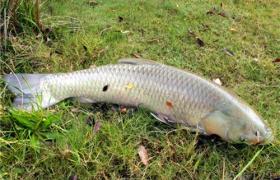 秋季钓对象鱼如何选择搭配鱼饵