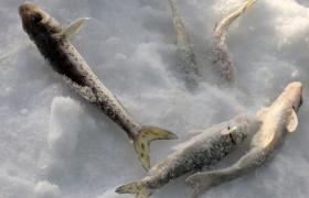 冬钓选择钓位与打窝的技巧