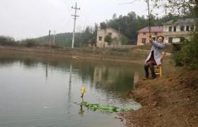 春季钓肥水塘小经验